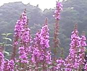 image/coo-ko-2006-08-13T09:45:47-1.jpg