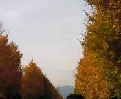 image/coo-ko-2006-12-07T18:15:36-1.jpg