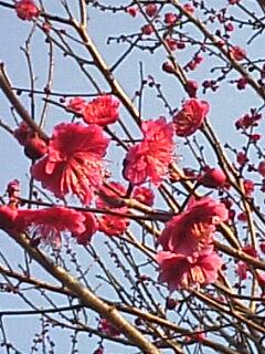 image/coo-ko-2007-02-06T16:47:54-1.jpg