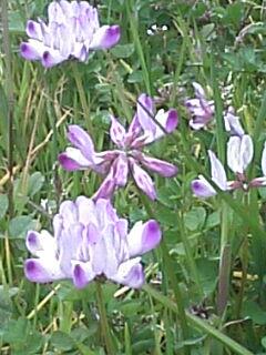 image/coo-ko-2007-03-05T10:12:20-1.jpg