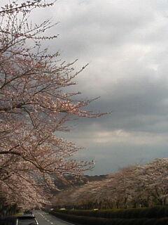 image/coo-ko-2007-04-05T17:38:18-1.jpg