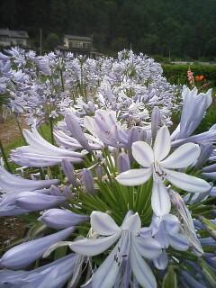 2008-07-15_15-26.jpg