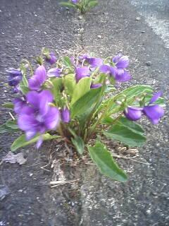 2009-04-05_16-43_0001.jpg